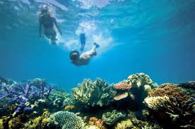 Great Barrier Reef valued at $56 billion