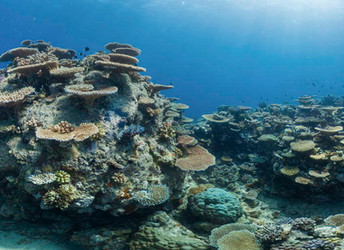 Impacts of Climate Change on World Heritage Coral Reefs report released