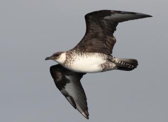 Study tracks seabird population decline