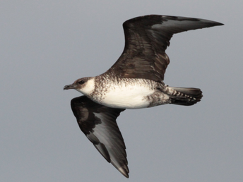 Study tracks seabird population decline