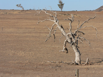 Council drought funding flowed to LNP seats