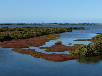 Port Phillip Bay's shellfish reefs to be restored