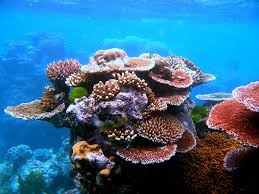 Signs of life for stricken coral reef