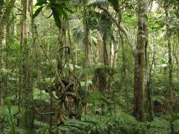 New growth forests could 'save the climate'