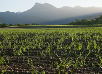 Applications sought for Queensland Land Restoration Fund