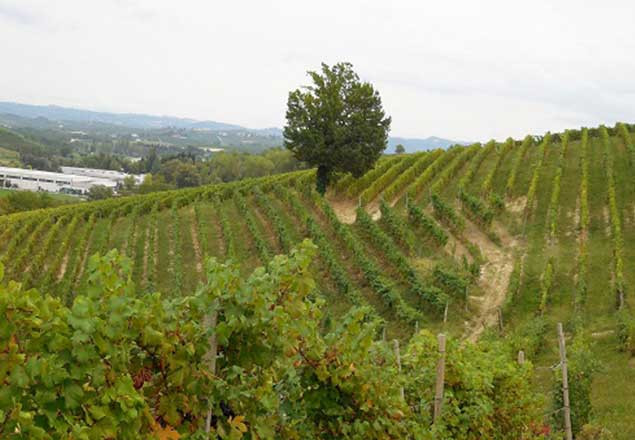 Winery-Page-Picture-Vineyard-Middle.jpg