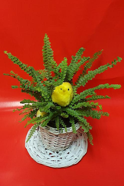 Vasque de plante 5