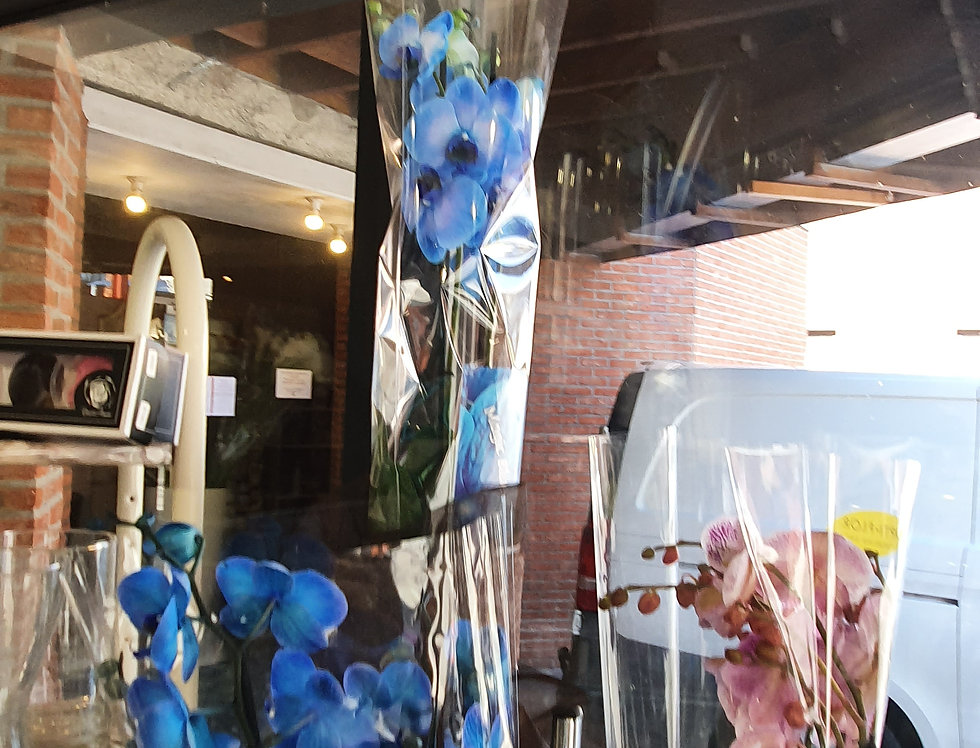 Orchidée Bleu