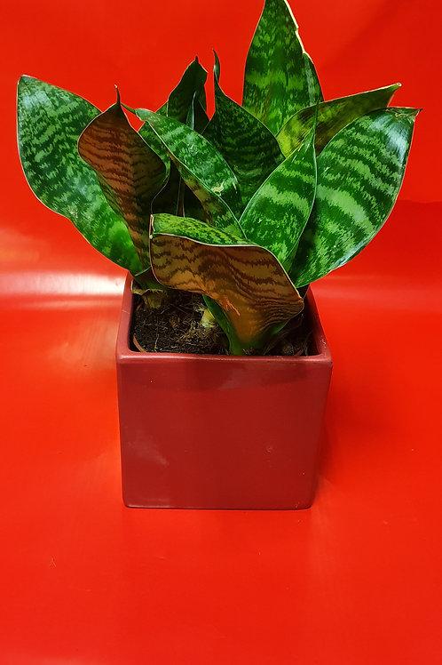 Plante avec pot rouge