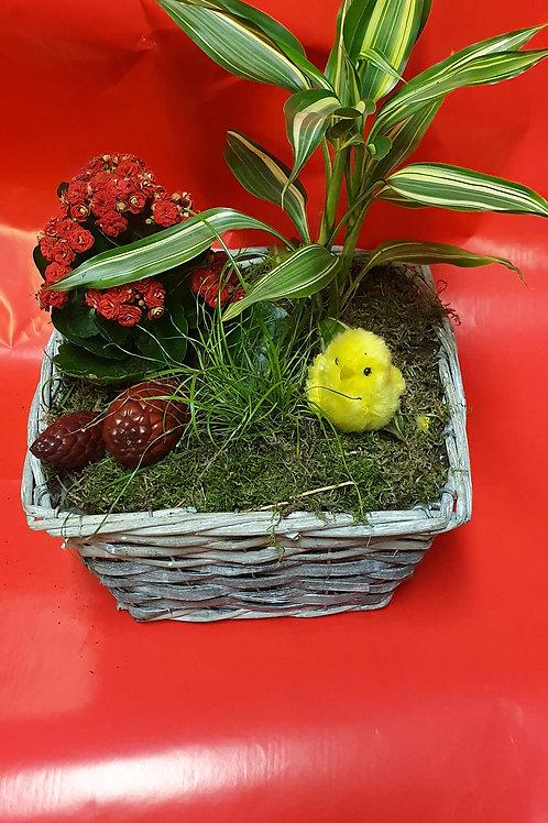 Vasque de plante 1