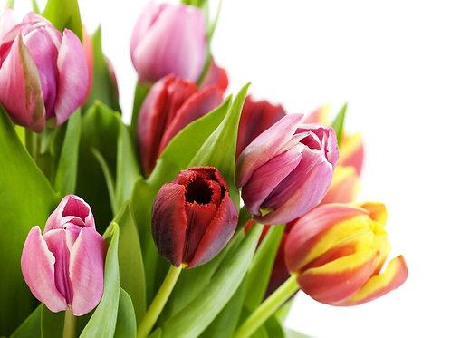 Bouquet de tulipe
