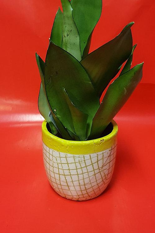 Plante avec un pot vert