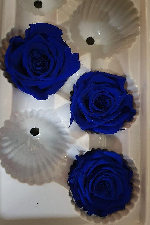 Rose éternelles