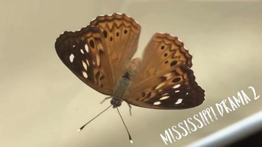 Mississippi Drama 2 Block 5:00pm