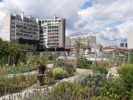 Mieux consommer à Paris : quand jardins partagés, AMAP et magasins bio germent dans la capitale