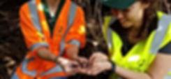 Ecology New Zealand undertaking a lizard survey