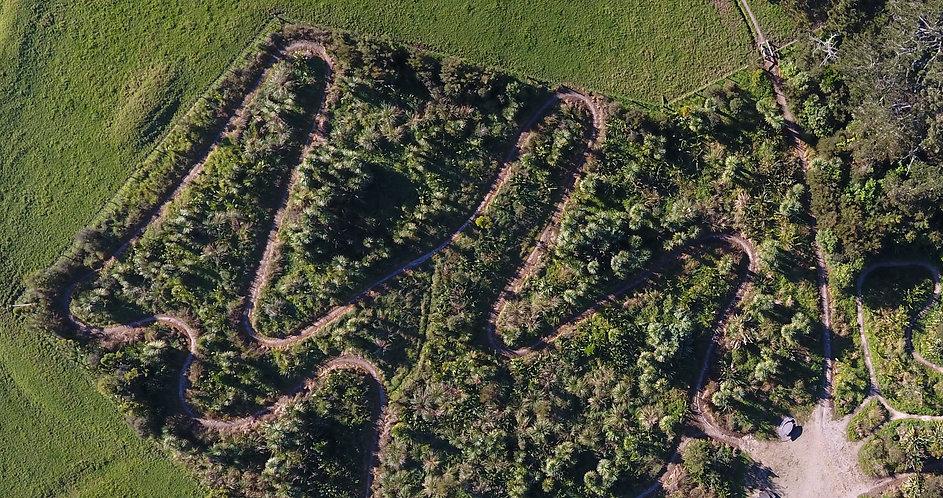 Ecological restoration UAV photo