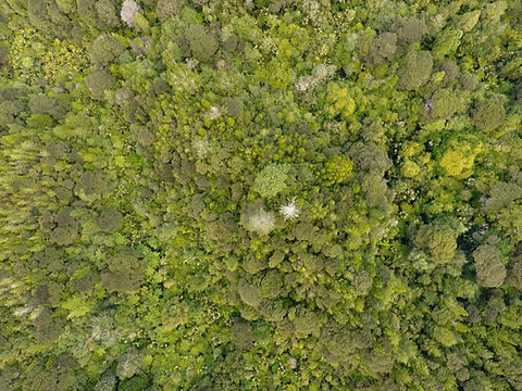 Wetland fence project captured by drone photography