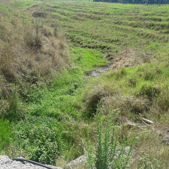 The Importance of the Riparian Margin