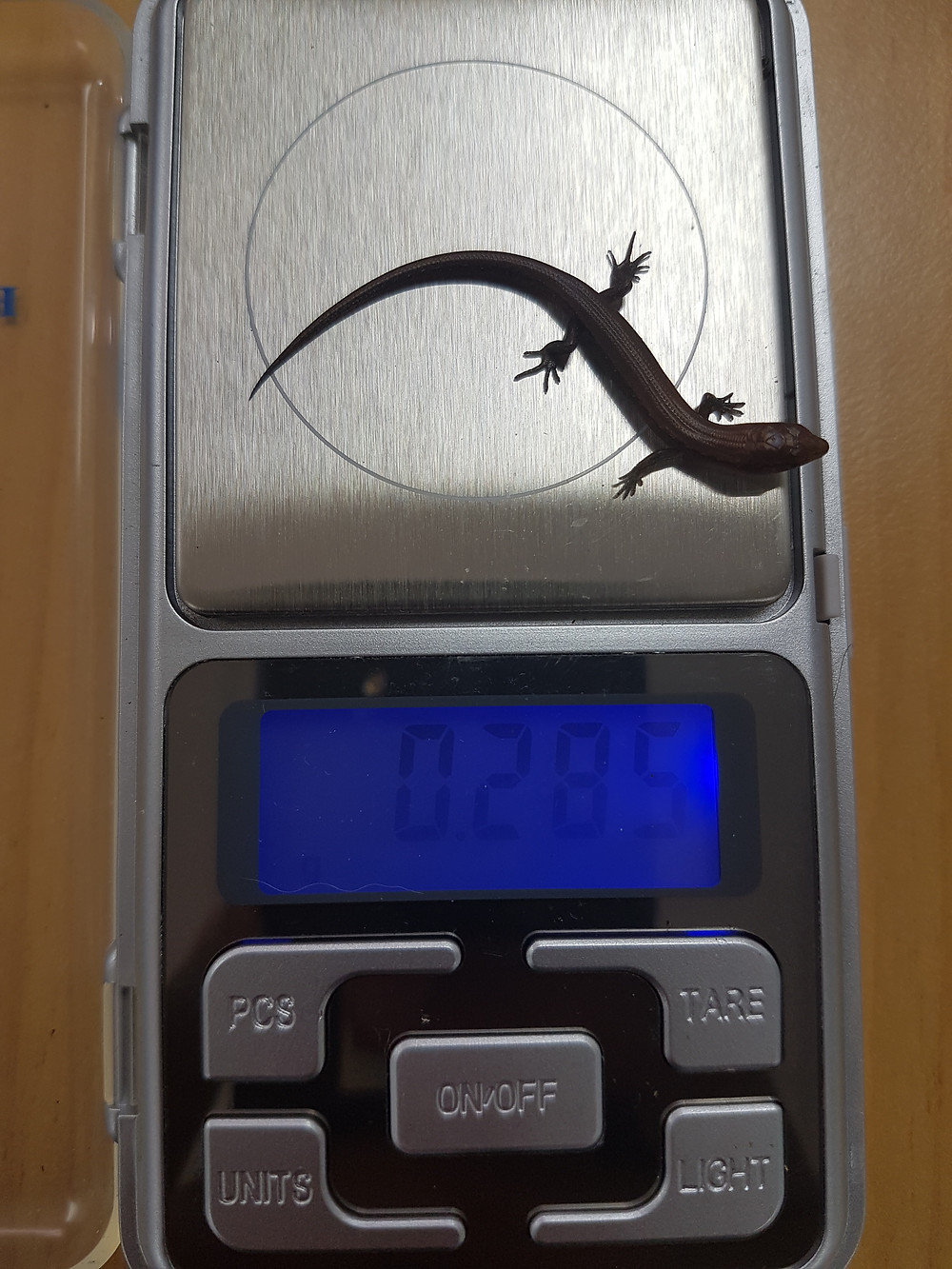 Weighing Lizards
