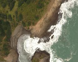 Piha Coast Line Ecology New Zealand