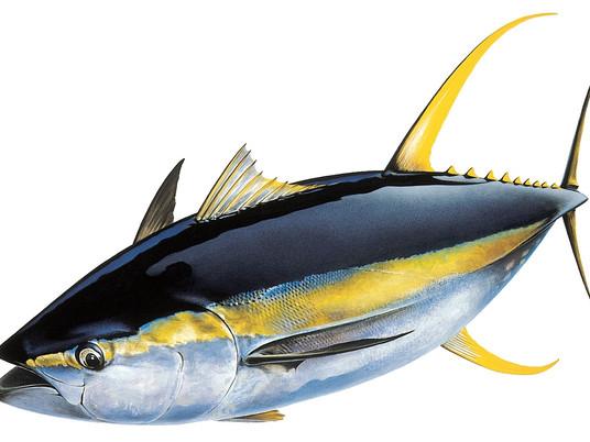 Fine-tuning the tuna genome