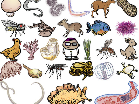 DNA Zoo & collaborators manuscript appears today in Science