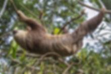 africa-animal-big-cat-88234.jpg
