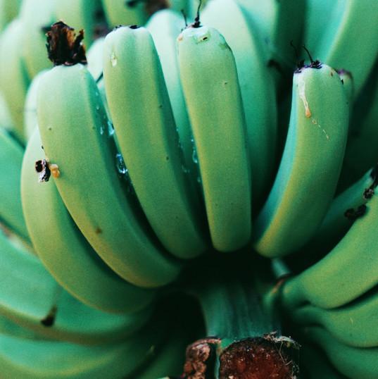 Bananas crying