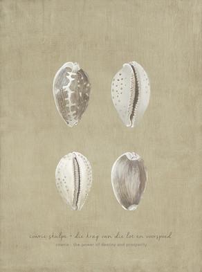 Shell Study I
