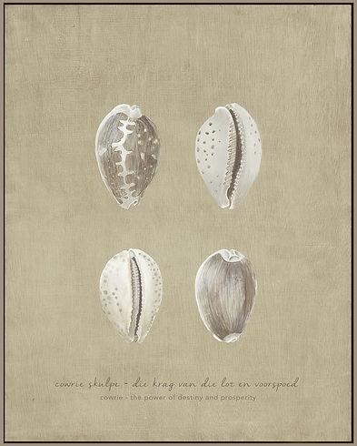 Cowry Shells.jpg