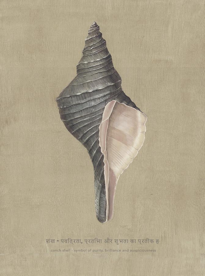 Shell Study II