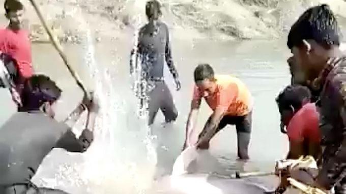 Captan en video a sujetos que golpearon a delfín hasta la muerte en India