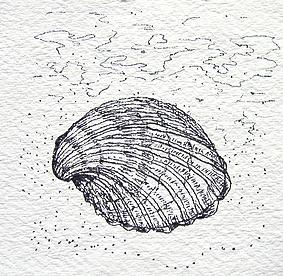 Seemuschel 1