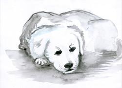 Hund in Gedanken