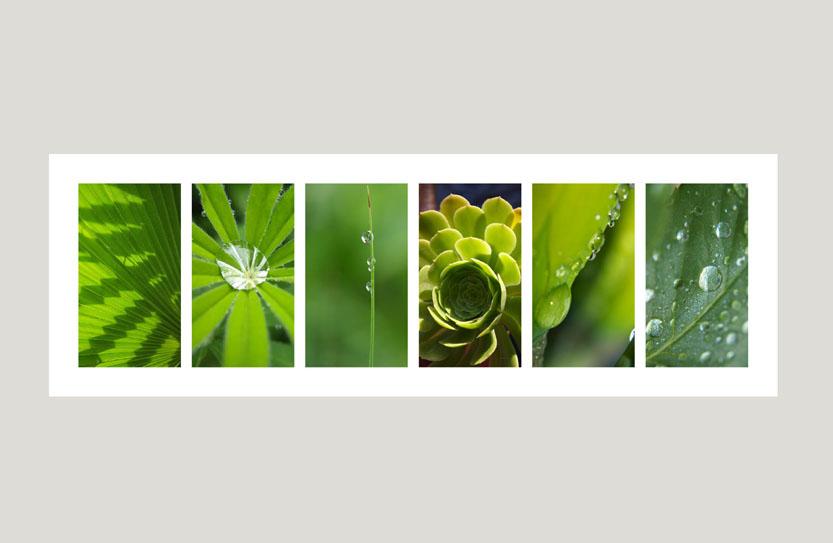 Grüne Frische