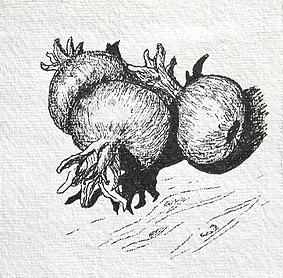 Granat-Äpfel