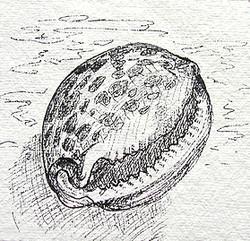 Seemuschel 3