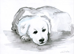 Schlafender Hund (Aquarell)