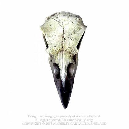 Reliquary Raven Skull (Alchemy Gothic)