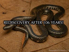 Rediscovery of the Selangor Mud Snake