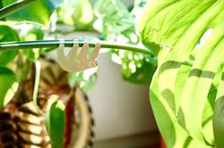 Faultier Plant Hanger.jpg