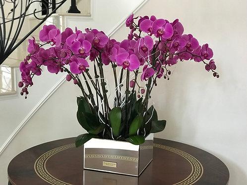 Large Mirror Box with Orchids Arrangement