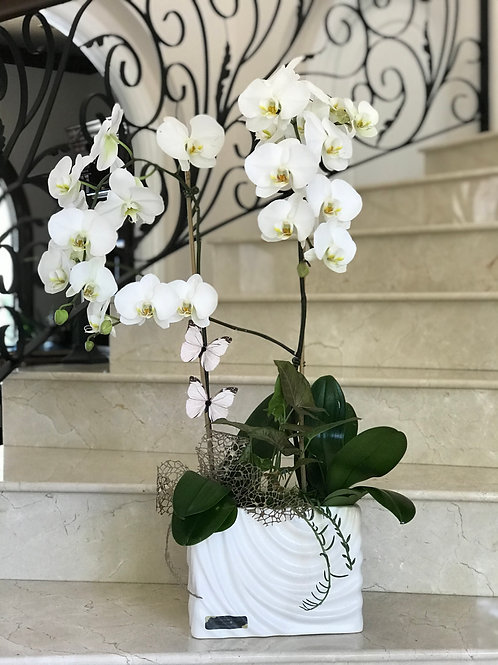 Orchid Arrangement in White Ceramic Vase