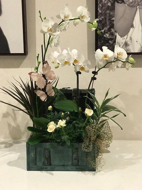 Orchid Arrangement in Green Antique Box