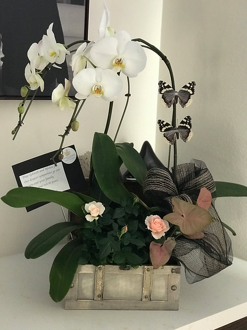 Small Orchid Arrangement in Antique Box