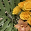 Thumbnail: Jungle Custom Arrangement