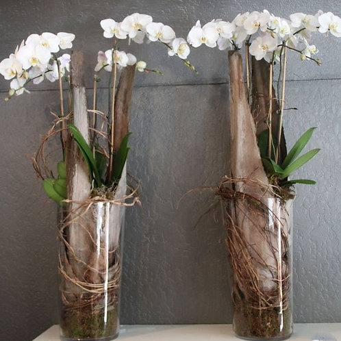 Orchid Arrangment in Glass Vase in Rustic Style