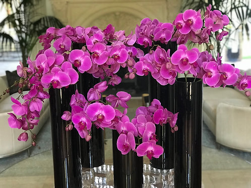 "Orchids Arrangements in Black vases ""5 Vases"""