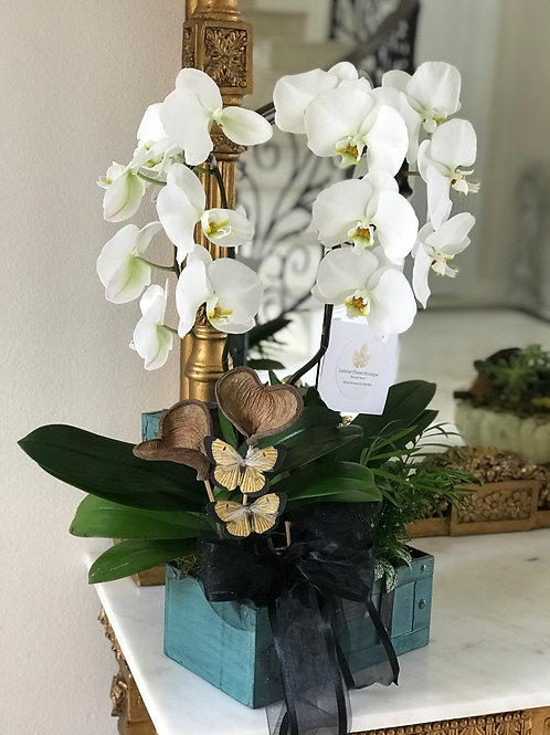 Orchid Arrangment in Green Antique Box
